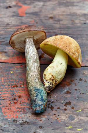 Two edible fresh mushrooms on the old wooden background