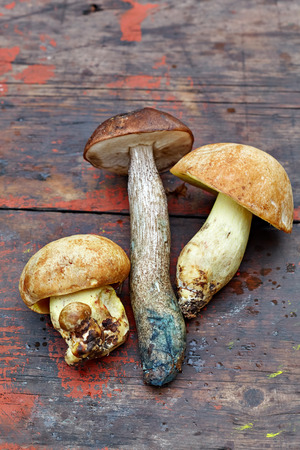 Several edible fresh mushrooms on the old wooden background Stock Photo