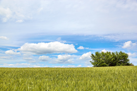 Spring field with clouds. Nature background Reklamní fotografie
