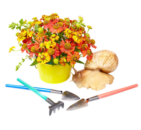 Red helenium, giant snail (Achatina Reticulata) and gardening tools on white background