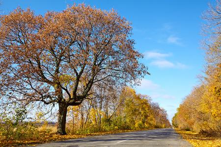 Beautiful autumn road on a background of blue sky Reklamní fotografie