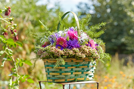 Bouquet of asters in a green basket on a nature background