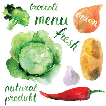 cebolla blanca: conjunto de las hortalizas de la acuarela Vectores