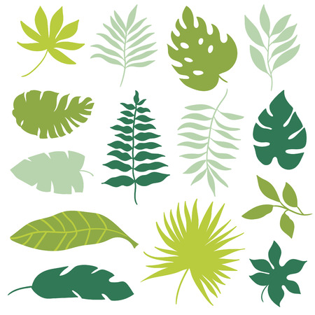 tropical forest: tropical leaves set