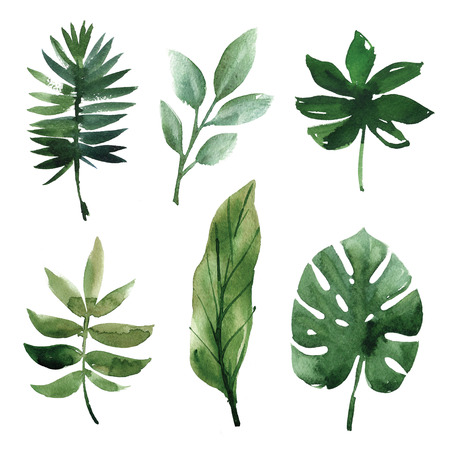 熱帯水彩画を葉します。