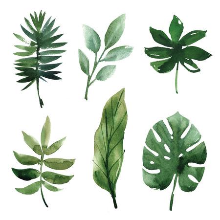 Aquarelle feuilles tropicales Banque d'images - 56756357