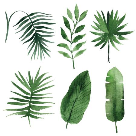 Aquarelle feuilles tropicales Banque d'images - 56756360