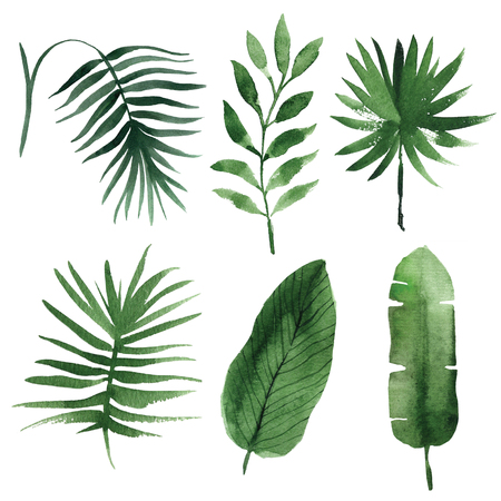 tropical forest: Watercolor tropical leaves