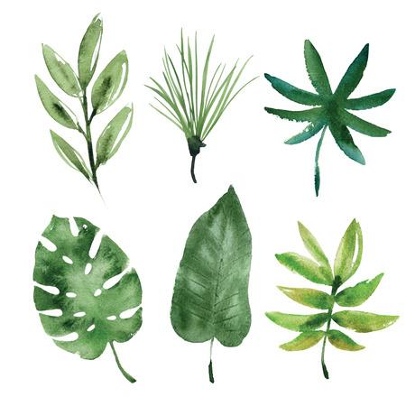 수채화 열대 나뭇잎 스톡 콘텐츠 - 56756358