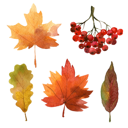 Hojas de otoño de la acuarela Foto de archivo - 60871995