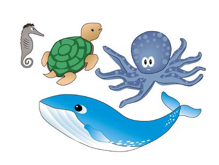 blue whale: Sea Animals Illustration