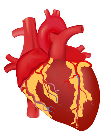 human: Human Heart with Clipping Path