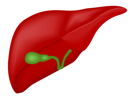 gallbladder: Liver and Gallbladder with Clipping Path Illustration