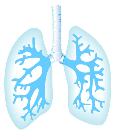 breathe: Lungs Illustration with Clipping Path Illustration