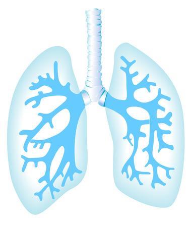 Płuca Ilustracja z Clipping Path