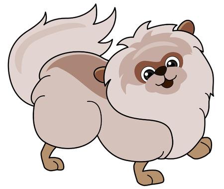 pomeranian: Pomeranian Illustration