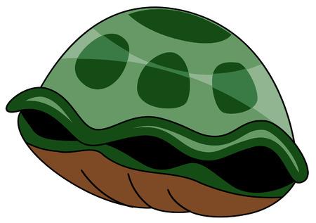 hiding: Turtle Shell Illustration