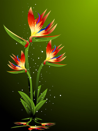 Birdof Paradise Illustration Vector