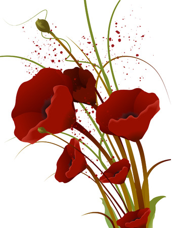 red poppy: Red Poppies with Clipping Path Illustration