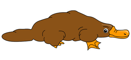 platypus: Platypus Illustration with Clipping Path