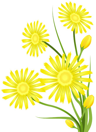 aster: Aster Flower with Clipping Path
