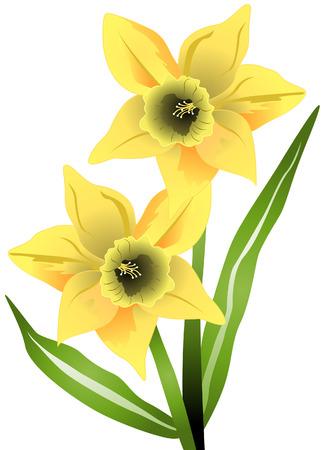 Jonquille de fleurs avec un masque vectoriel