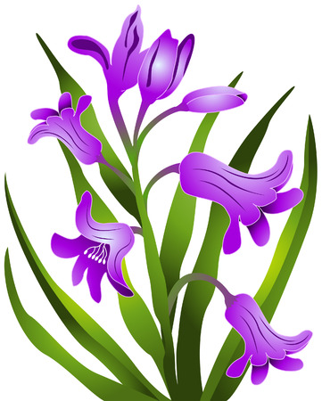 hyacinth: Hyacinth Flowers with Clipping Path Illustration