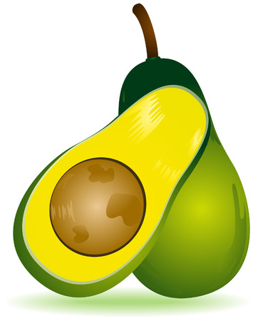Avocado Illustration with Clipping Path Vector