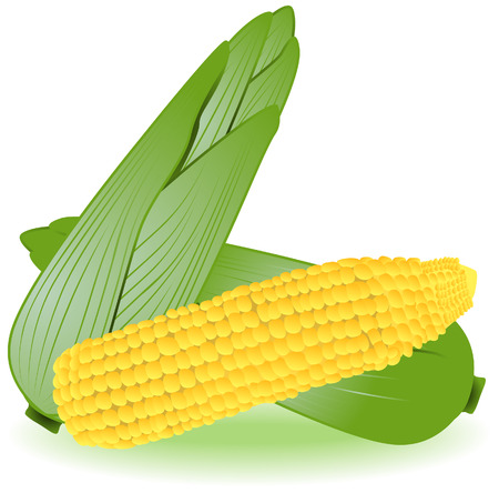 Corns Illustration with Clipping Path