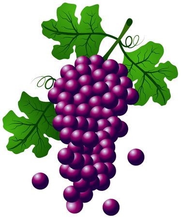 ベアリング: クリッピング パスとブドウの図