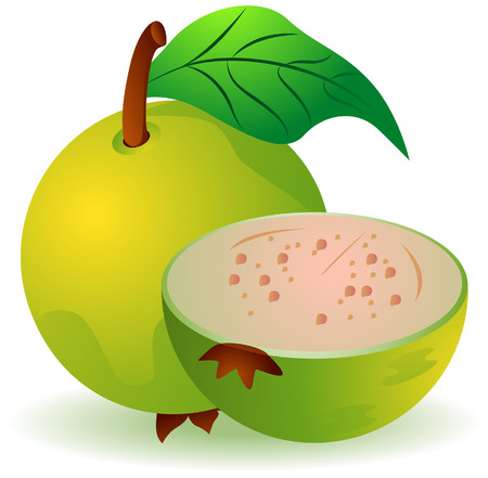 guava: Guava Illustration with Clipping Path