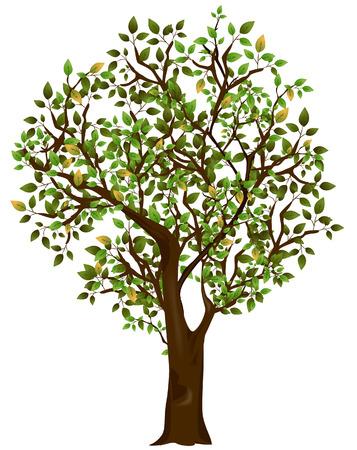 tree illustration: Tree Illustration with Clipping Path
