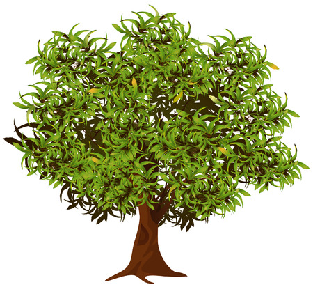 Mango Tree Illustration with Clipping Path