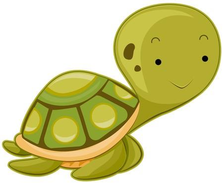Cute Sea Turtle photo
