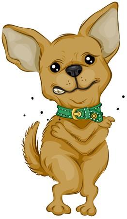 cartoon chihuahua: Chihuahua Scratching