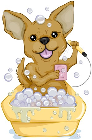 pet grooming: Chihuahua taking a bath