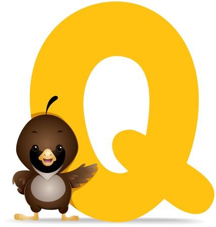 alphabet animaux: Q pour Quail