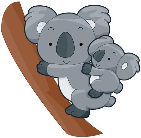phascolarctos cinereus: Koala lindo