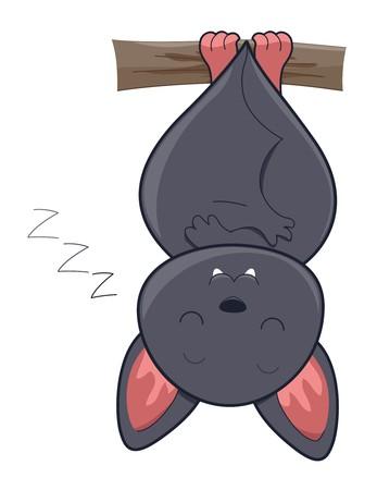 chauve souris: Cute Bat sommeil