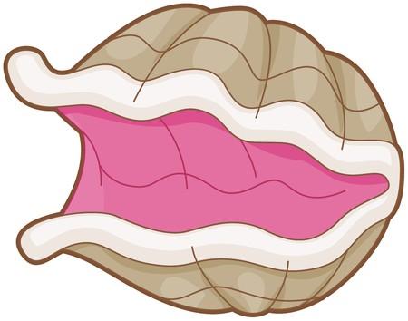 almeja: Oyster abrir grande sin un Pearl