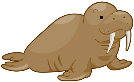 the walrus: Walrus Facing Towards the Right Isolated against White Background
