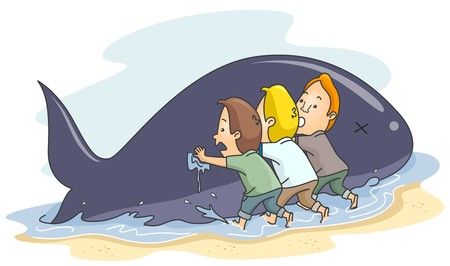 cartoon whale: A Small Group of People Pushing A Beached Whale Back to the Ocean Stock Photo