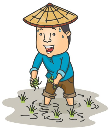 asian farmer: A Farmer Planting Rice in His Ricefield