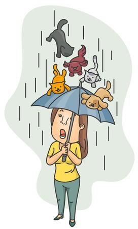 lloviendo: Una mujer con su paraguas como un escudo de un ave de gatos y perros  Foto de archivo