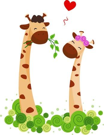 admirer: Illustration of a Male Giraffe Offering Food to a Female Giraffe