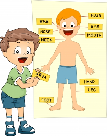 Illustration of a Kid Identifying the Parts of the Body Stock Photo