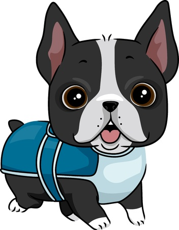 boston terrier: Illustration of a Dog Wearing a Coat