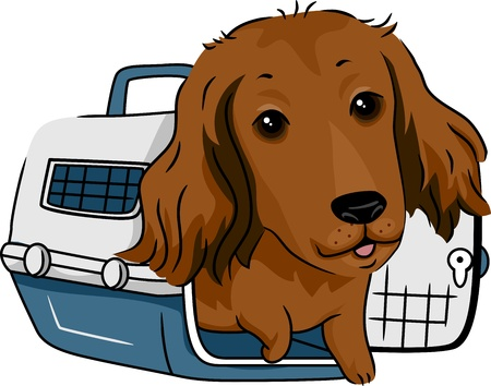 haired: Illustration of a Long Haired Dachshund in a Crate