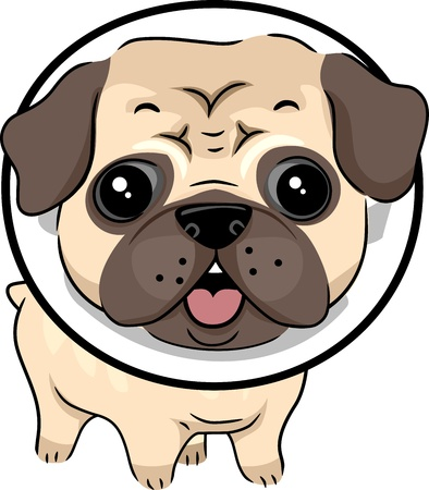 pug: Illustration of a Dog Wearing a Protective Collar Stock Photo