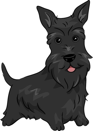 aberdeen: Illustration Featuring a Scottish Terrier Stock Photo